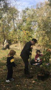 family plants sweetgum tree